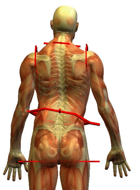 Abnormal structural position leads to abnormal tissue function