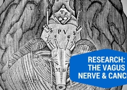 The Vagus Nerve and Cancer
