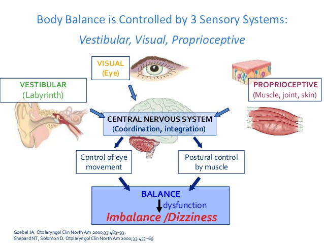 The 3 systems that form the Balance Triad