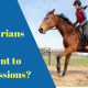 equestrians-and-concussion