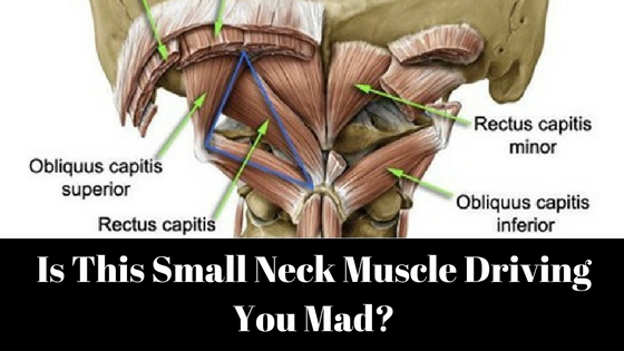 neck-muscle